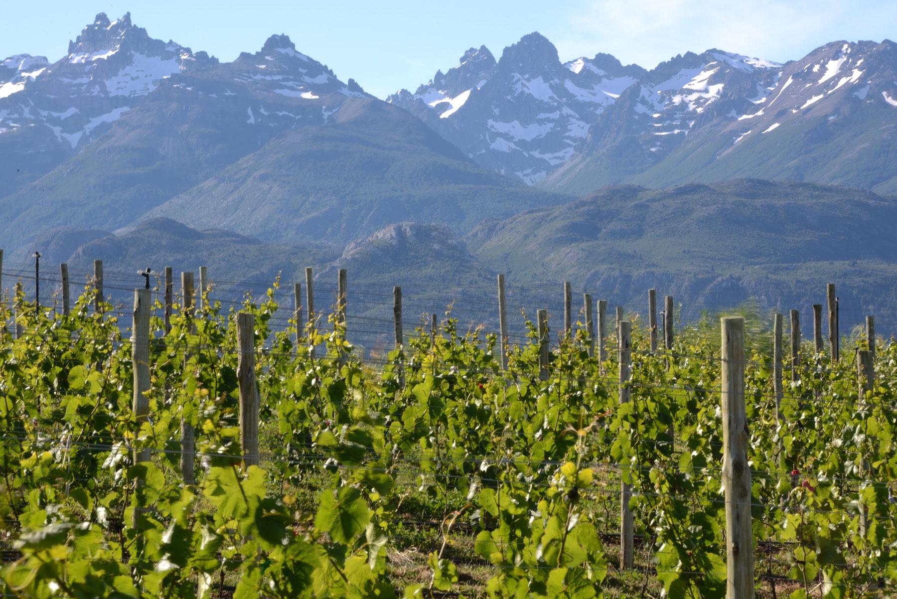 Chubut también tiene una Ruta del Vino