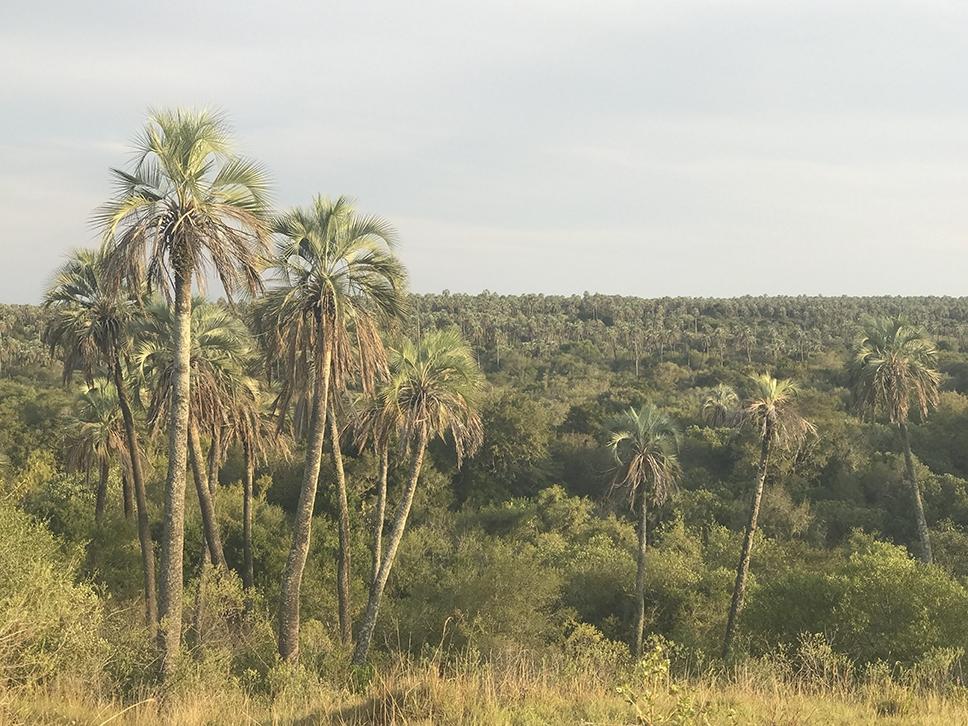 El increíble bosque de palmeras