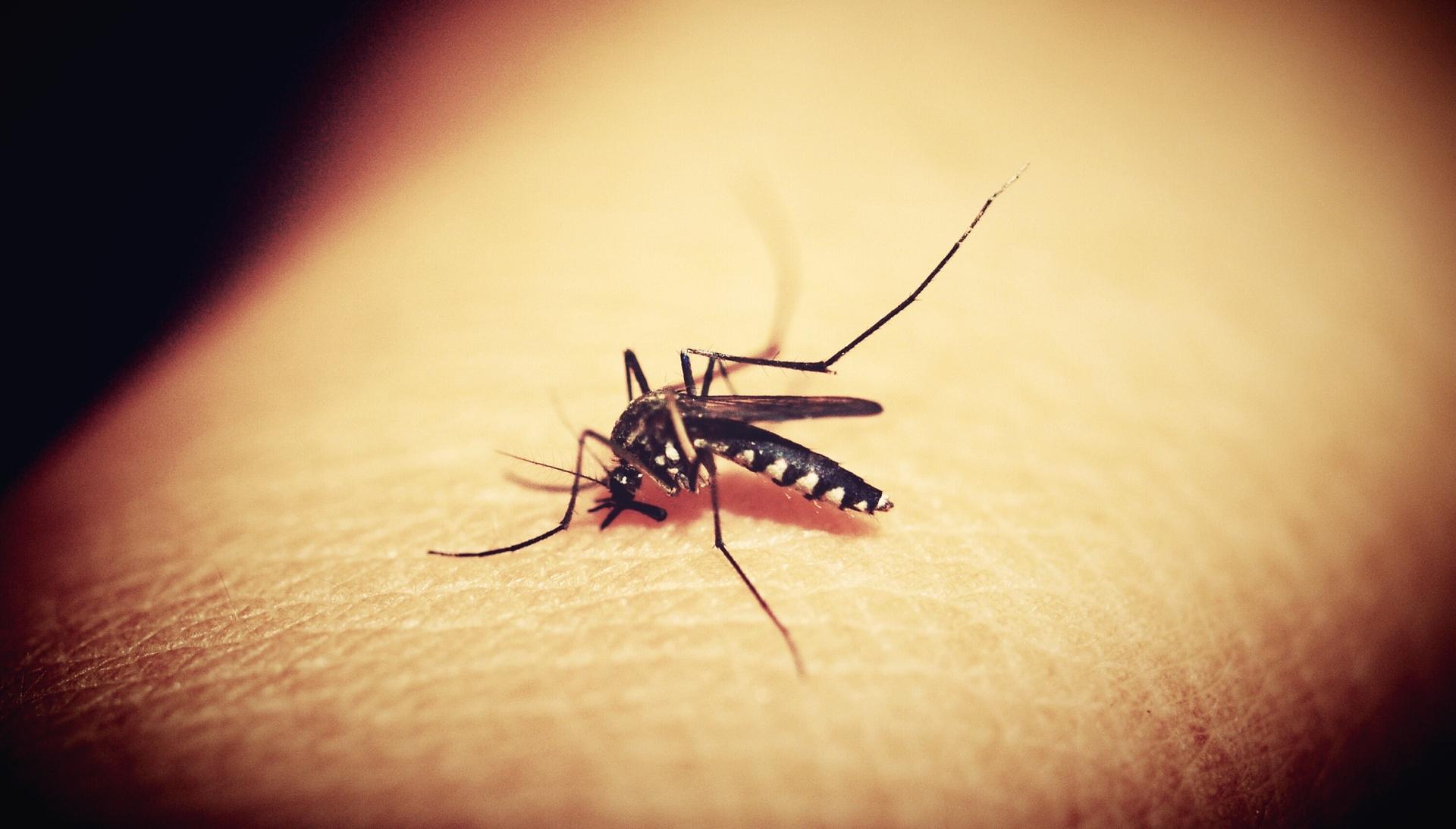 El fin del zika: ¿gracias a Google?