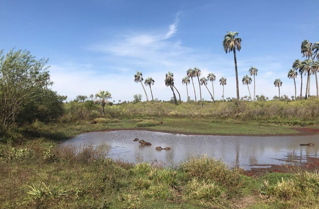 Senderismo en el Parque Nacional El Palmar