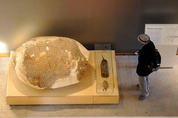 Una visita al renovado Museo de Ciencias Naturales