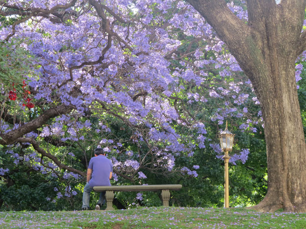 Buenos Aires vestida de azul