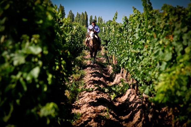 CocinAR y las Rutas del Vino
