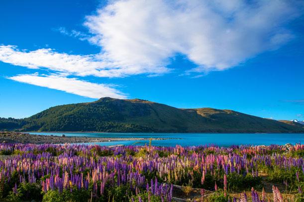 Cinco irresistibles razones para visitar Nueva Zelanda durante la primavera