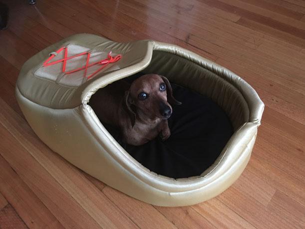 Una nueva solución para cuidar las mascotas cuando los dueños se van de viaje