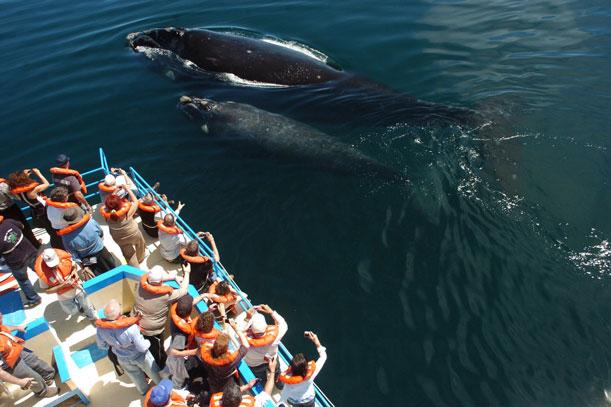 Miles de turistas para ver las ballenas en 2014