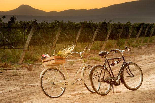 Se puede recorrer laBodega Septimaen bici y viví por dentro los viñedos