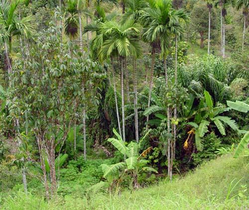 La Amazonía en peligro