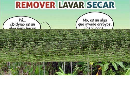 Cómo combatir la propagación del alga dydymo