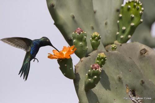 Avistaje de aves en Chaco