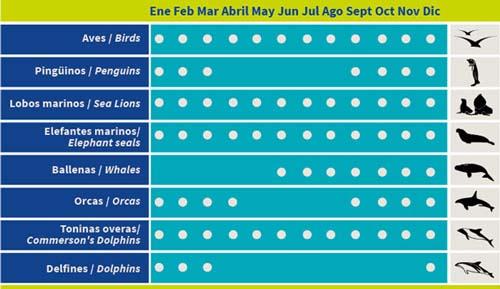 El calendario anual para saber cuándo avistar la fauna marina y costera en la región