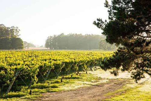 Trapiche Costa & Pampa abre sus puertas para visitas enológicas