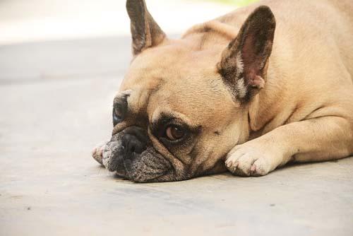 United suspende traslado de mascotas