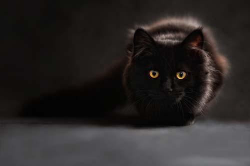 ¿Amante de los gatos? Llega el CatFest2018