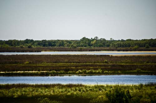 La Reserva Otamendi será parque nacional