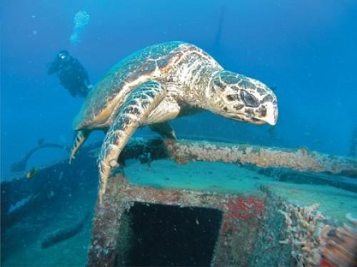 Una nueva generación de tortugas marinas