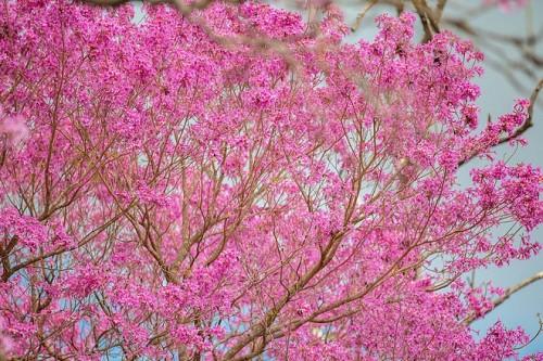 Colores de primavera en los parques argentinos