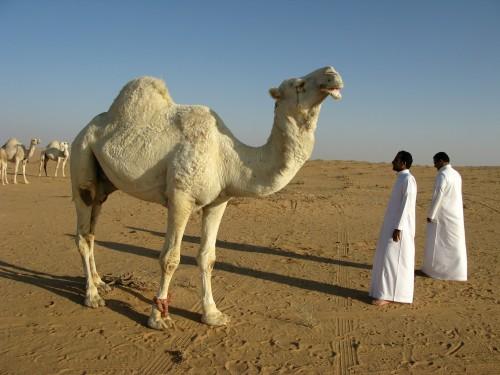 Arabia Saudita: ¿un nuevo destino turístico?