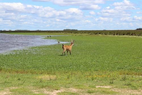 Nuevo Parque Nacional CIervo de los Pantanos
