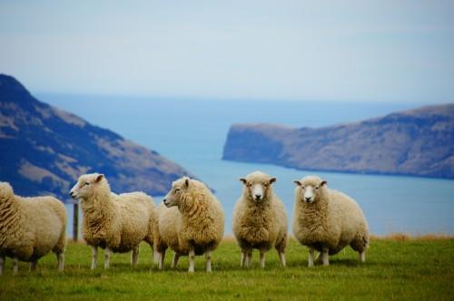 En Nueva Zelanda: los aduaneros piden tu password