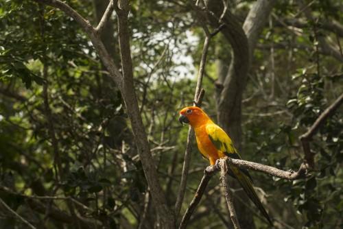 Brasil podría perder la mitad del Amazonas para el 2030