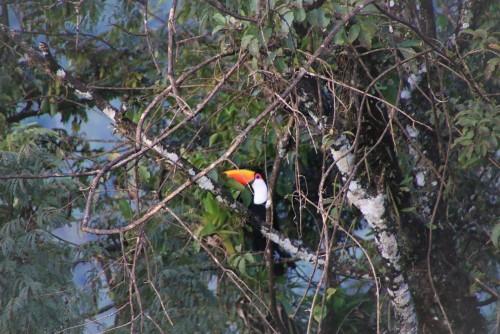 La selva misionera: una maravilla natural