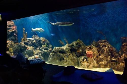 En Temaikèn: una noche con los tiburones