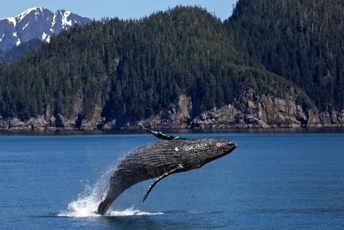 Una triste noticia para las ballenas