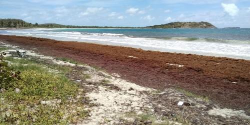 Riviera Maya: los turistas huyen por la proliferación de algas