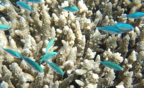 Un Uber submarino para conocer la Barrera de Coral