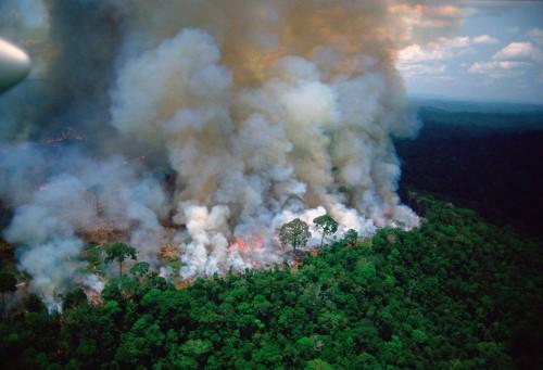 El Amazonas en llamas