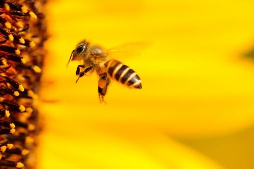 El mundo de la apicultura en Colón