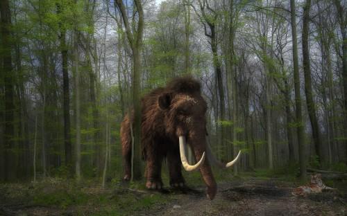 ¿Pronto un parque con mamuts en Siberia?