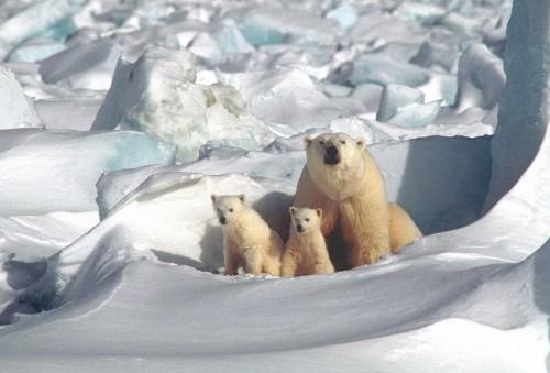 El Polo Magnético Norte se mueve hacia Siberia