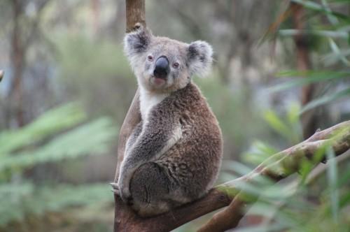 Mil millones de animales muertos en los incendios de Australia