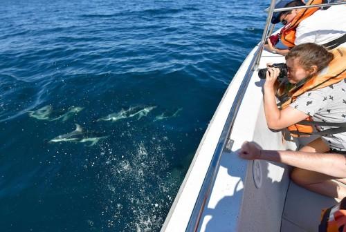 Avistaje de delfines el Golfo Nuevo