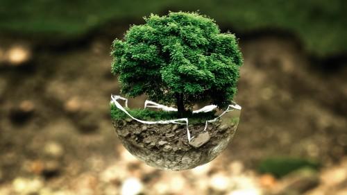 En San Valentín: mejor regalar un árbol que una flor