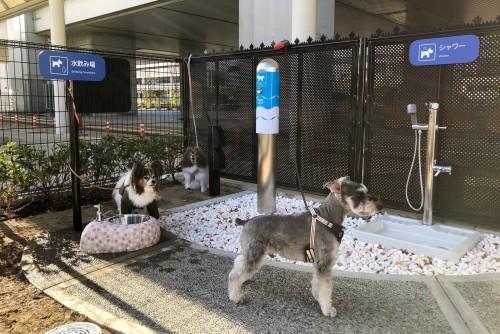 Baños para perros en aeropuertos