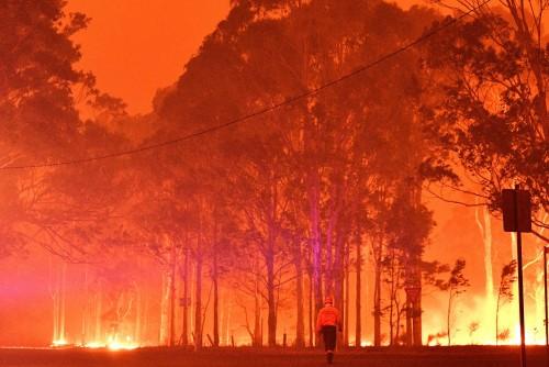 Australia perdió el 20% de sus bosques en los incendios