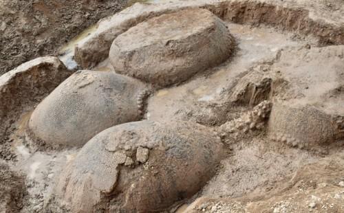 Asi son los gliptodontes encontrados en Bolivar