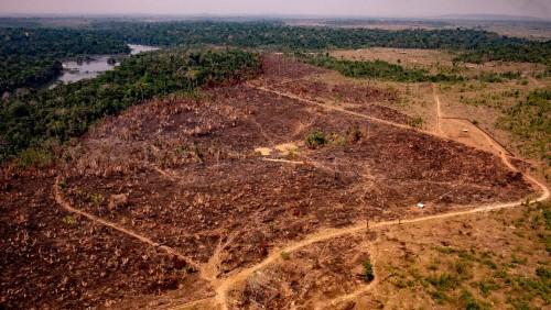 La selva amazónica podría desaparecer en 50 años