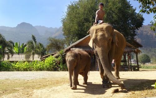 Elefantes de Tailandia en peligro por el derrumbe del turismo