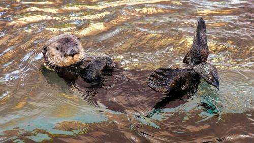 Durante la cuarentena: mirá el acuario de Monterey