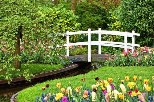 Durante la cuarentena: paseá entre los tulipanes del Keukenhof