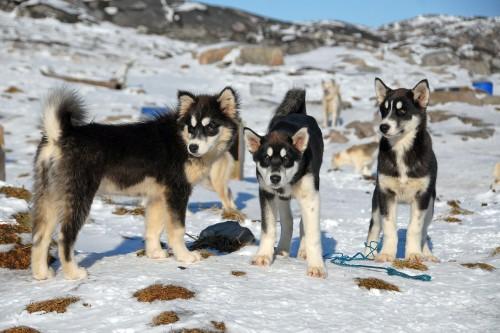Durante la cuarentena: explorá Groenlandia