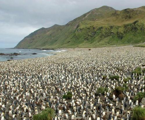Durante la cuarentena: descubrí una de las islas más inaccesibles