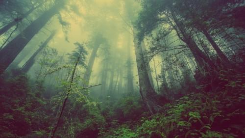 Recalentamiento global: los árboles son cada vez más chicos