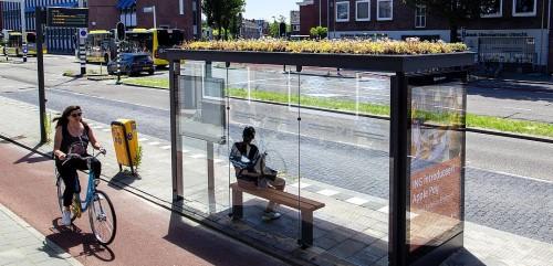 Paradas de buses con techos vegetales, en Holanda