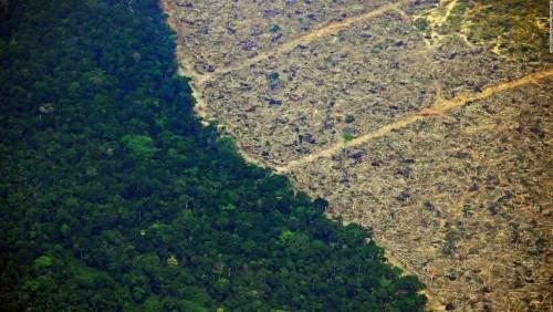 Se incrementó la deforestación en 2019