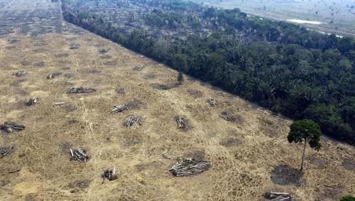 Con o sin pandemia: Brasil sigue destruyendo sus bosques